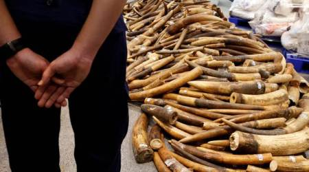 DRI, Directorate of Revenue Intelligence, assam wildlife, guwahati railway station, assam ivory seized, ivory seized in assam, karbi anglong