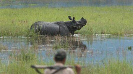 Assam floods: Heavy rains leave Kaziranga National Park inundated, animals being shifted to safe spots