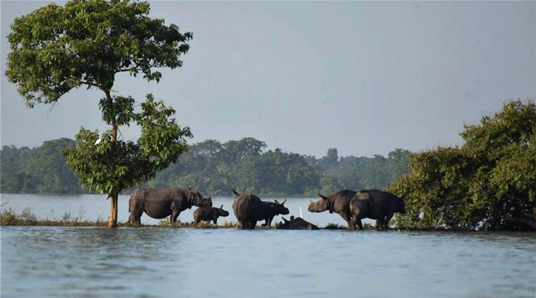 Assam floods, kaziranga national park, kaziranga animals, Assam rainfall, kaziranga inundated, sarbananda sonowal, Assam government,