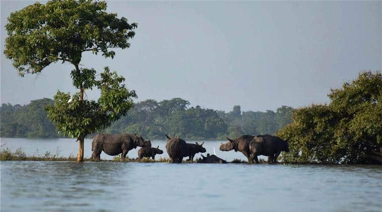 Assam floods, kaziranga national park, kaziranga animals, Assam rainfall, kaziranga inundated, sarbananda sonowal, Assam government,