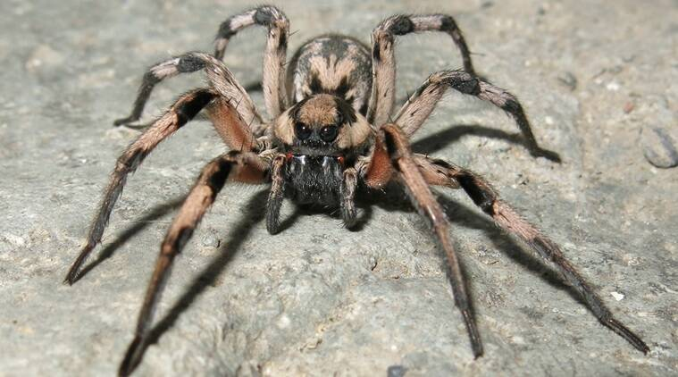 New Spider Species Named After Harry Potter Character Trending