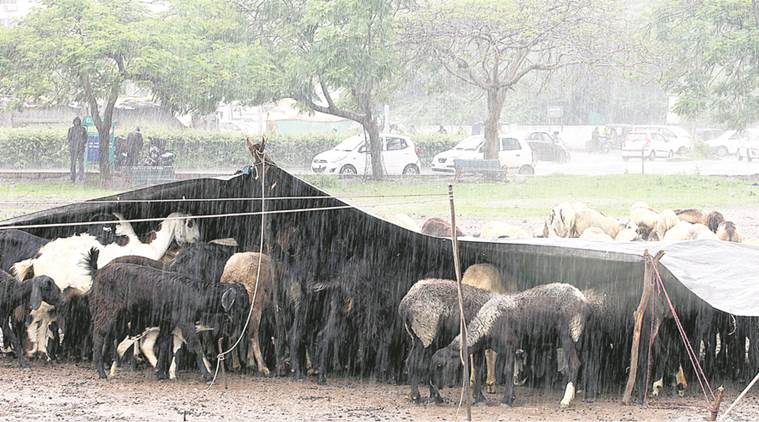 Heavy rains in southern and western parts of Bengal