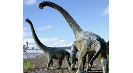 Dinosaur remains found at rediscovered old site in Australia