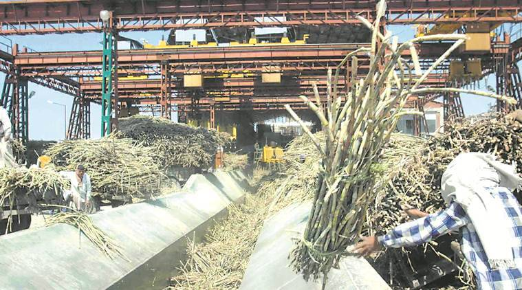 tamil nadu drought, decreasing sugarcane production in tamil nadu, tamil nadu drought, monsoon, tamil nadu sugarcane mills, inadequate rainfall, indian express