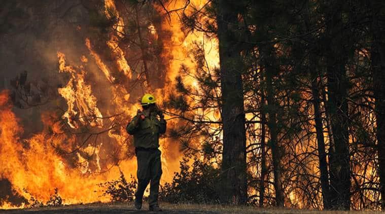 forest fire, portugal forest fire, portugal, emergency services, Europe, world news, indian express news