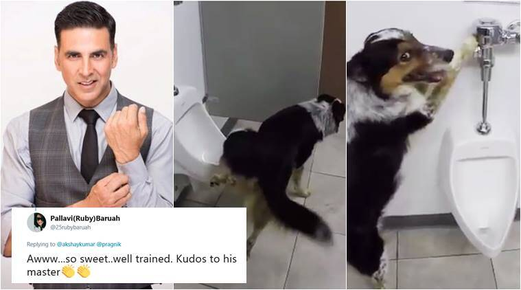 akshay kumar, toilet, akhay kumar toilet, dog using toilet, funny dog video, animals using toilet video, viral videos, cute animal videos, indian express
