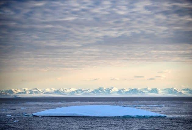 Arctic, arctic ice melting, global warming, MSV Nordica, international researchers, arctic animals, arctic life