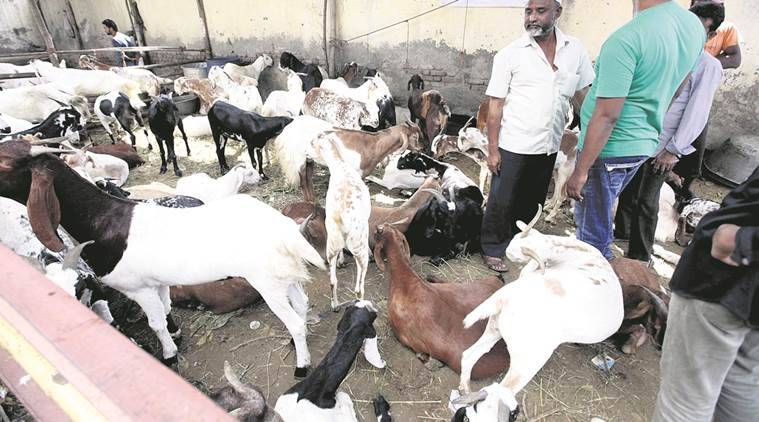 Export of livestock from ports indefinitely banned