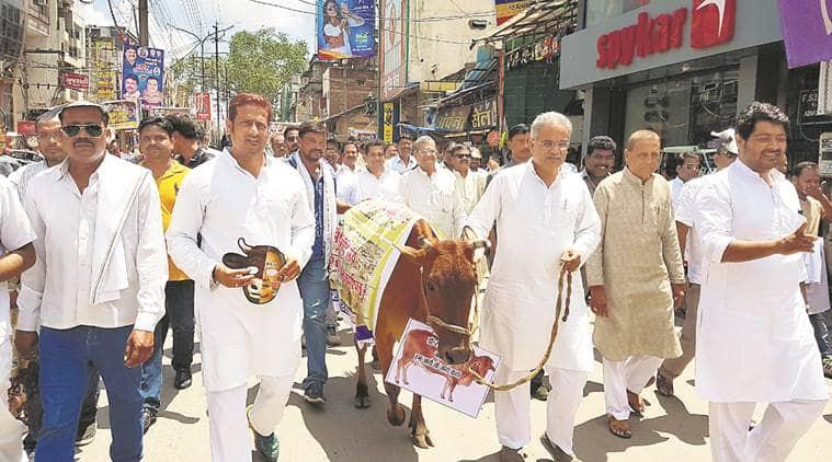Chhattisgarh, Chhattisgarh cow shelter, Chhattisgarh cow deaths, Chhattisgarh BJP