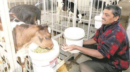 How technology can deliver freedom from male calf