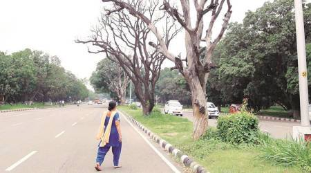 Cutting Dead Trees: Is permission needed even during emergencies, High Court asks administration