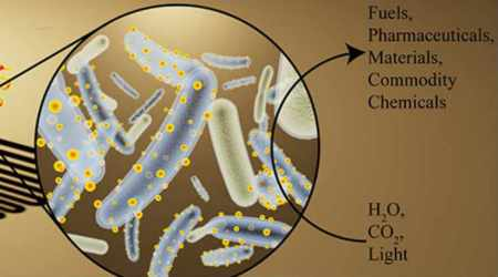 cyborg bacteria, harvesting solar energy, inefficient chlorophyll, natural photosynthesis, semiconductor nanocrystals, nanoparticles, tiny solar panels, carbon dioxide reduction