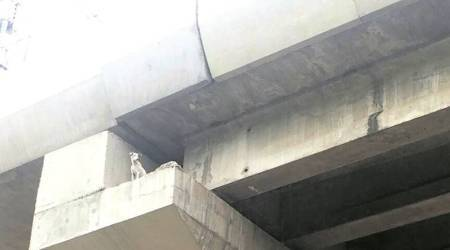 Delhi: Stuck on top of Metro pillar for four days, stray dogrescued