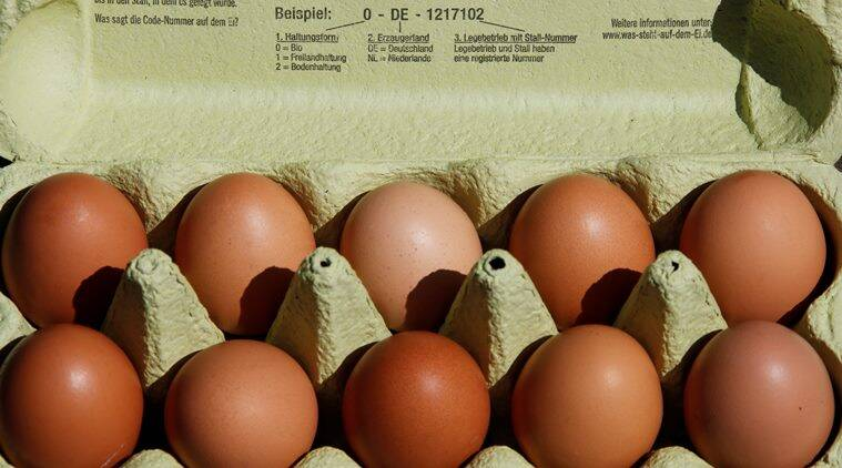 insecticide fipronil, contaminated eggs, germany, germany eggs, Netherlands, latest news, latest world news