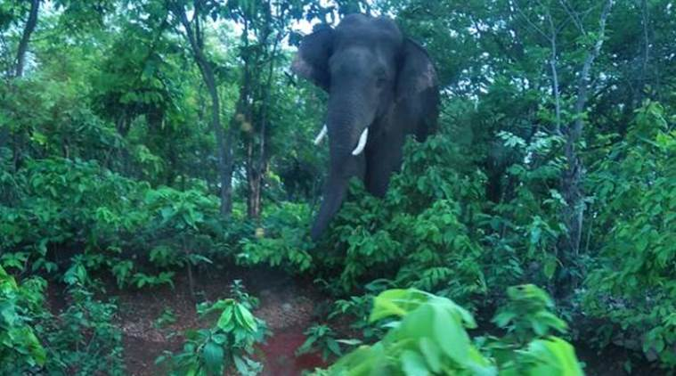 'Rogue' elephant, which killed 15 people, shot down by