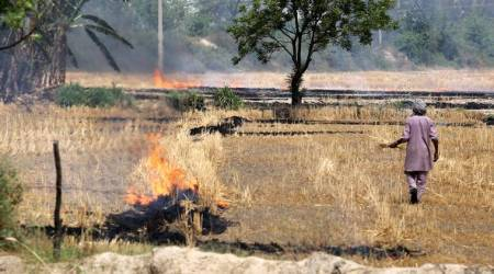 Farmers seek Rs 300 a quintal bonus for not burning stubble