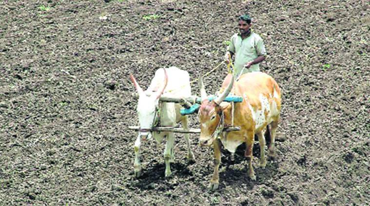 Crop Insurance scheme, maharashtra Crop Insurance scheme, maharashtra government on Crop Insurance scheme, maharashtra farmers, indian express news