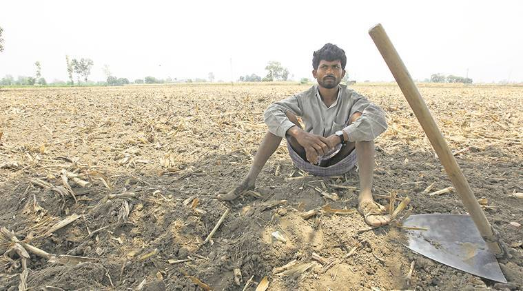 farmer suicide, no rain, no monsoon, dry monsoon, farmer rain, agriculture ministry, met department, maharashtra drought, waterless maharashtra, indian express news, india news
