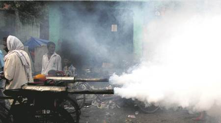 Milder form of dengue dominant this year: AIIMS