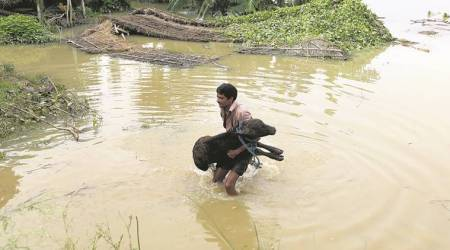 After disease, the flood: In vicinity of Gorakhpur, families on highway with their children and cattle