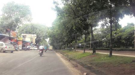 Metro corridors: 700 trees on chopping block in Pune, locals see red