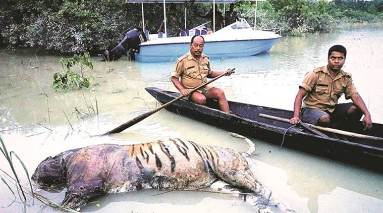 Kaziranga, Kaziranga national park, Assam floods, Kaziranga Floods, Kaziranga animals, Kaziranga inundation, Monsoon, India news, Indian Express