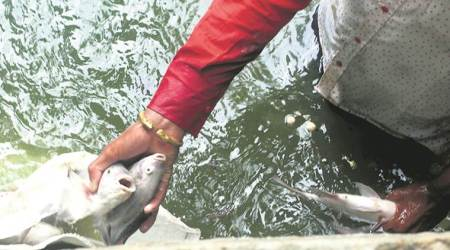Pond 'not cleaned', dead fish pile up in Lodhi Garden