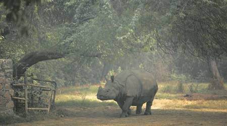 Three months after rhino poaching at Gorumara: Wildlife official admit to lapses in protocol, probe ongoing