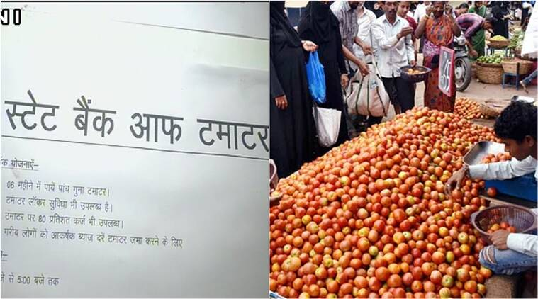 tomatoes prices, state bank of tomato, state bank of tomato congress protest lucknow, state bank of tomato for tomato prices, what is state bank of tomato, indian express, indian express news