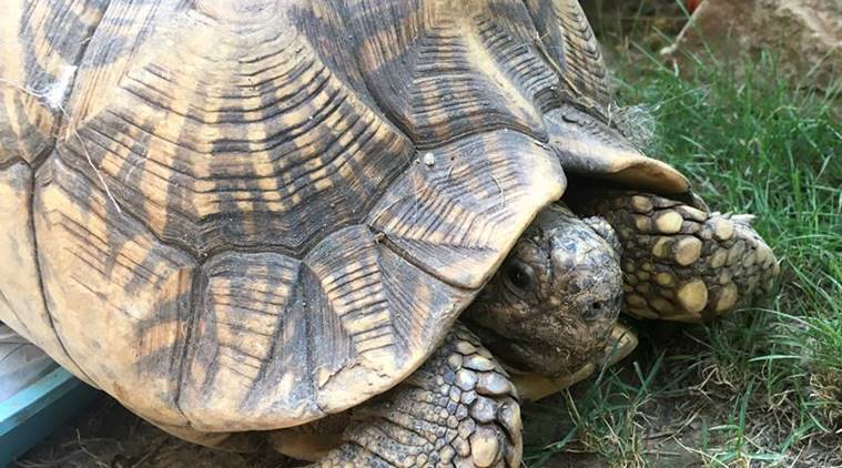 tortoise, facts for kids