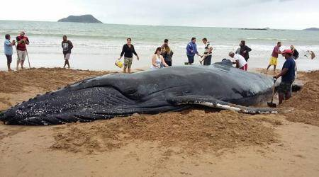Watch VIDEO: Whale in Thailand dies after SWALLOWING 80 plasticbags