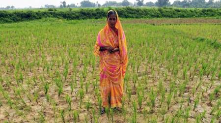 Nagpur division: Deficit rain hits sowing of paddy