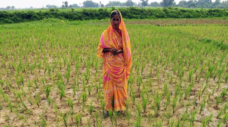 A field of her own | The Indian Express