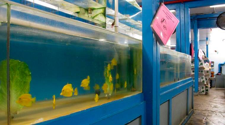 Image result for Hawaii court halts commercial scooping of fish for aquarium,