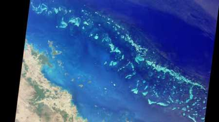 Great Barrier Reef, coral protection, crown-of-thorns starfish, COTS coral appetite, coral destruction, giant triton, sea snail counter, COTS outbreaks, coral protection, Great Barrier Reef restoration