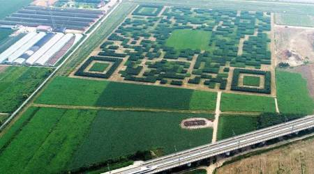 This Chinese village built a giant QR code with trees in a bid to attract more tourists!