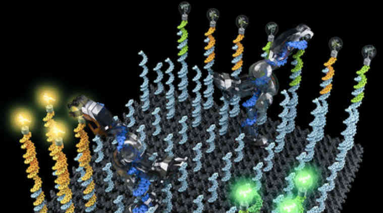Nanorobot, DNA strand, California institute of Technology, Caltech nanorobot, novel therapeutic chemicals, drug delivery systems, nucleotides, cargo transportation, molecular robot, artificial molecular factory