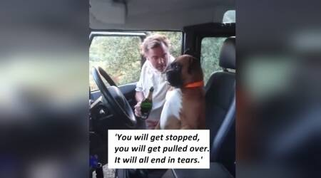 VIDEO: Man giving his DOG a lesson in DRUNK DRIVING is the funniest ever!