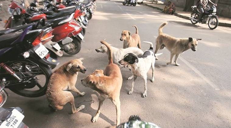 animal census, animal tracking, animal census maharashtra, animal geo-tagged, animals aadhaar, animals count, indian express news