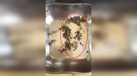 WATCH: Delhi man finds live bugs in Domino's Pizza seasoning sachet; video goes viral