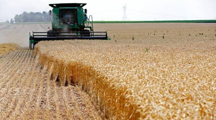 Japan bans Canadian wheat after some GMO grain found
