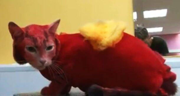 Costume cats or Daenerys' dragons: A Game of Thrones makeover?