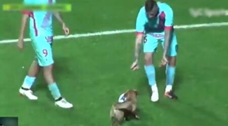 VIDEO: Dog entering a football field during match and playing with the ball is the most amusing thing you will watch today