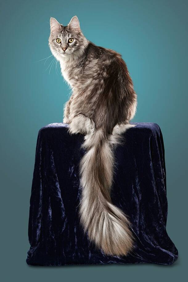 Photos Longest Legs To The Tallest Cat Some Of This Year