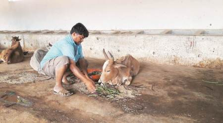A day in the life of Ganesh Agrawal: 'Running a gaushala is like operating afactory'