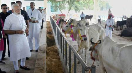 PM Narendra Modi watches live surgery on calf for removing polythene