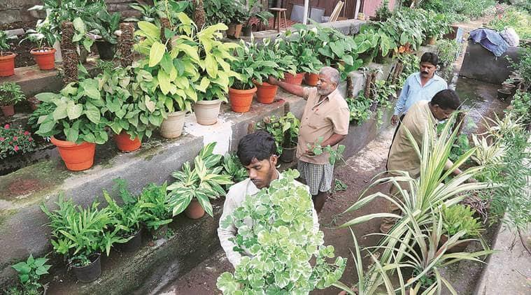 Maharashtra govt, Maharashtra plantation conclave, Maharashtra Raj Bhavan, Maharashtra Tree Plantation Conclave, Mumbai News, Indian Express, Indian Express News