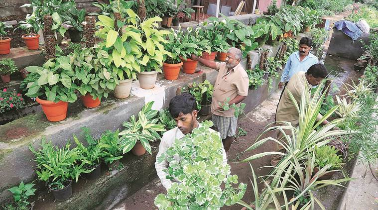 Maharashtra Govt To Hold Plantation Conclave The Indian