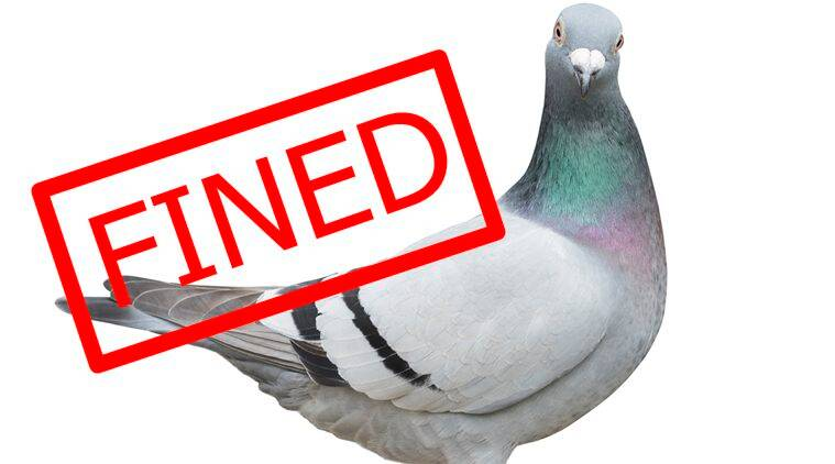 conductor fined, pigeon on a bus, conductor fined for not cutting a bird ticket, Pigeon travelling in a bus, Indian express, Indian express news
