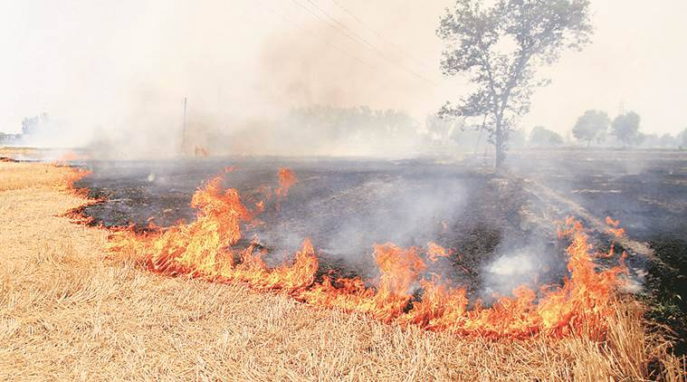 Punjab field fires, crop burning, stubble burning, Punjab NGT order, Punjab black diwali, Punjab farmers, Punjab pollution, Punjab sowing season, Punjab diwali, Punjab Pollution Control Board, Punjab news